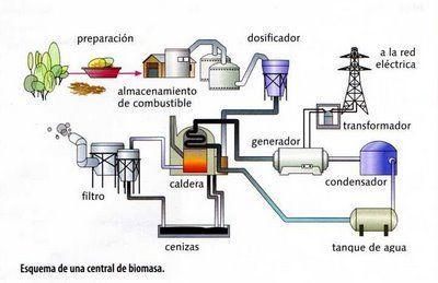 Biomasa2.jpg
